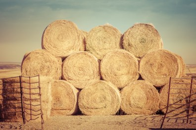 Round haybales stacked high.