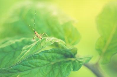 Cute bug on a leaf.