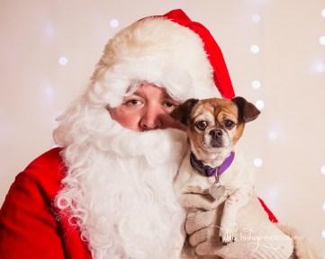 Christmas Pet Portrait