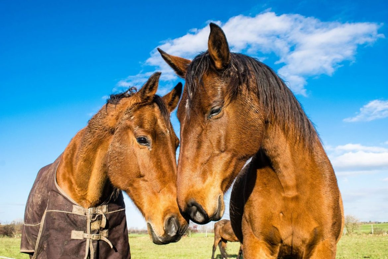 horses 1078676 1280