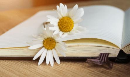 Notebook daisy 1