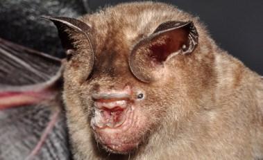 Top 10 Creepiest Looking Creatures