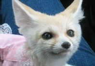 Insane Exotic Pets You Can Own Legally