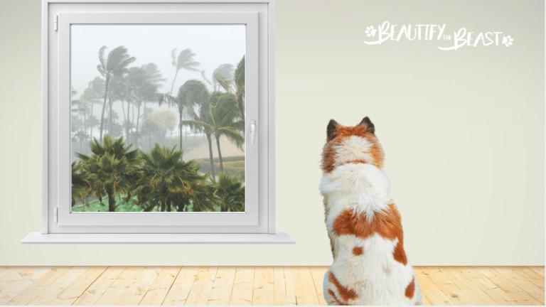 The Hurricane Prep List For Pets