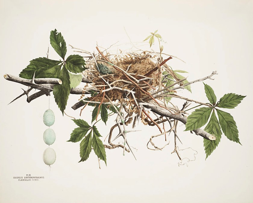 illustrations-of-the-nests-and-eggs-of-birds-of-ohio