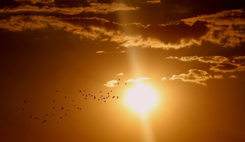 zonnebanken