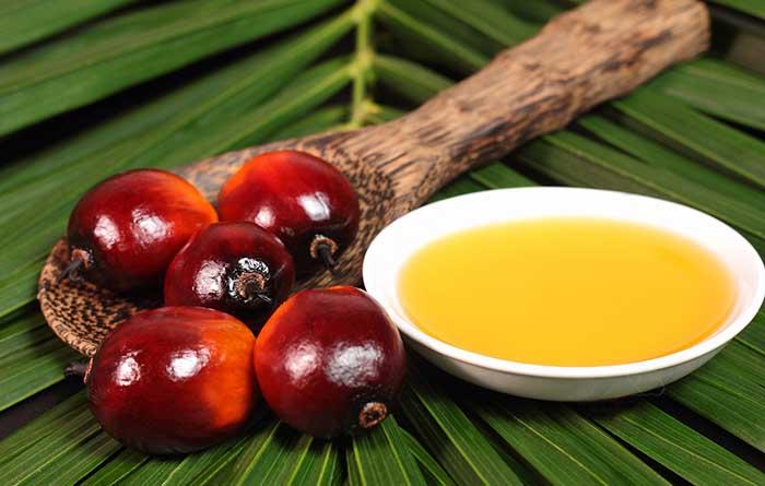 Resultado de imagen de Aceite de palma imagenes