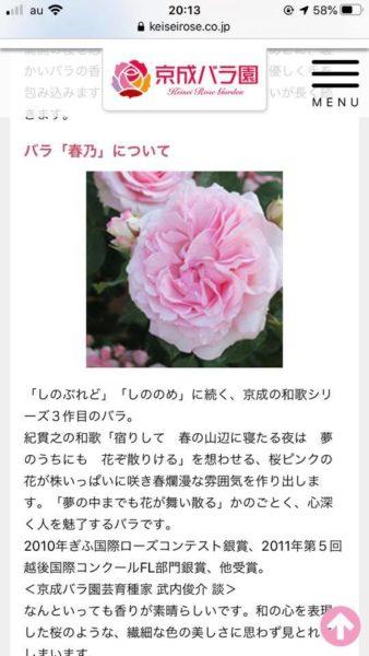 京成バラ園香水「春乃」について