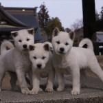 渋谷ヒカリエで岩合光昭写真展開催! ねこ、いぬ、パンダと「どうぶつ家族」
