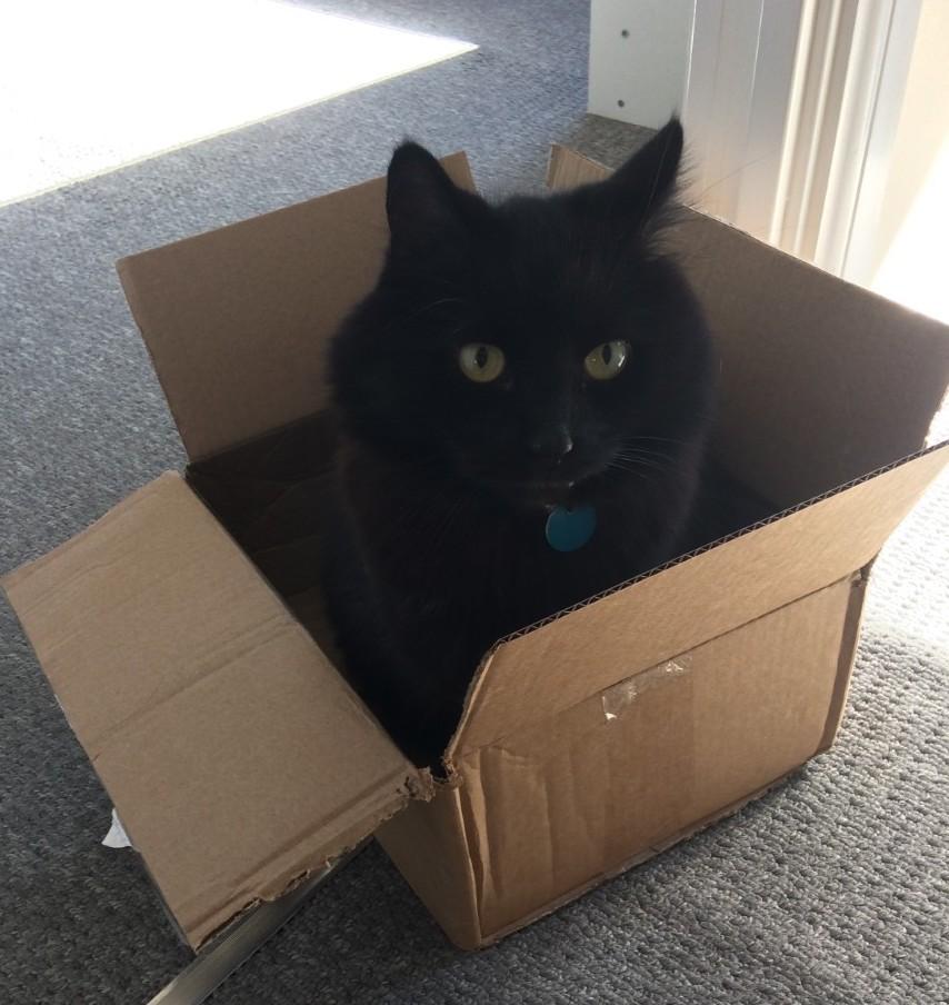 Miles Cat