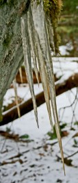 icicles with brown tips