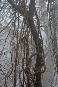 convoluted vines
