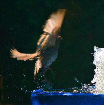 one bird alighting