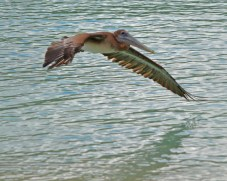 wing nearly touches water