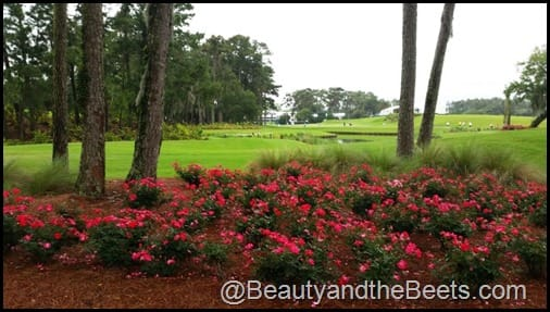 TPC Sawgrass course beauty