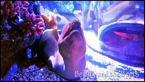 Moray Eels SEA Life Orlando Beauty and the Beets