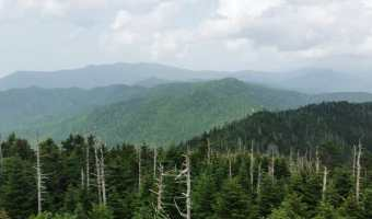 Smoky Mountains Edition- Friday Favorites