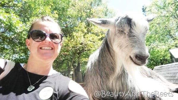 Lilly the Billy goat Magnolia Plantation Beauty and the Beets