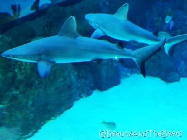 Sea Life Orlando sharks Beauty and the Beets