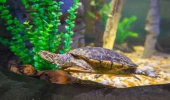 Turtle Fest at SEA LIFE Orlando Aquarium
