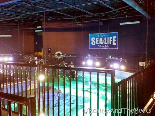 behind the scenes Orlando Sea Life Aquarium Beauty and the Beets