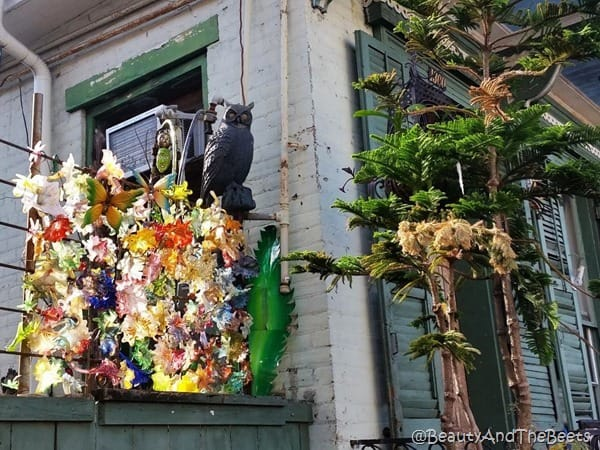 New Orleans Owl Beauty and the Beets