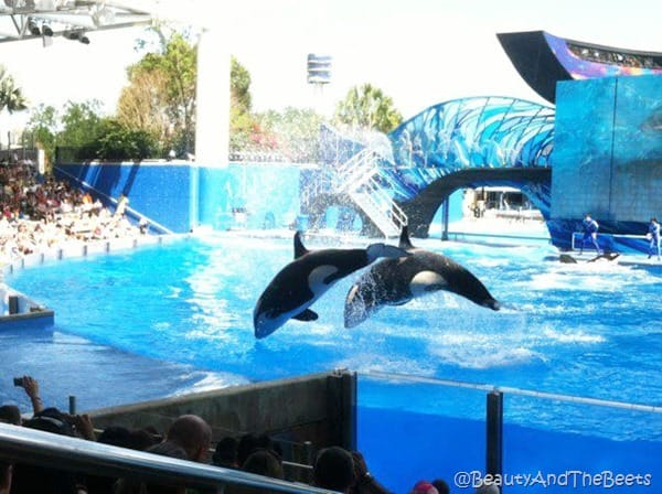 Sea World (14)