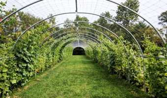 The Culinary Vegetable Institute – Milan, Ohio