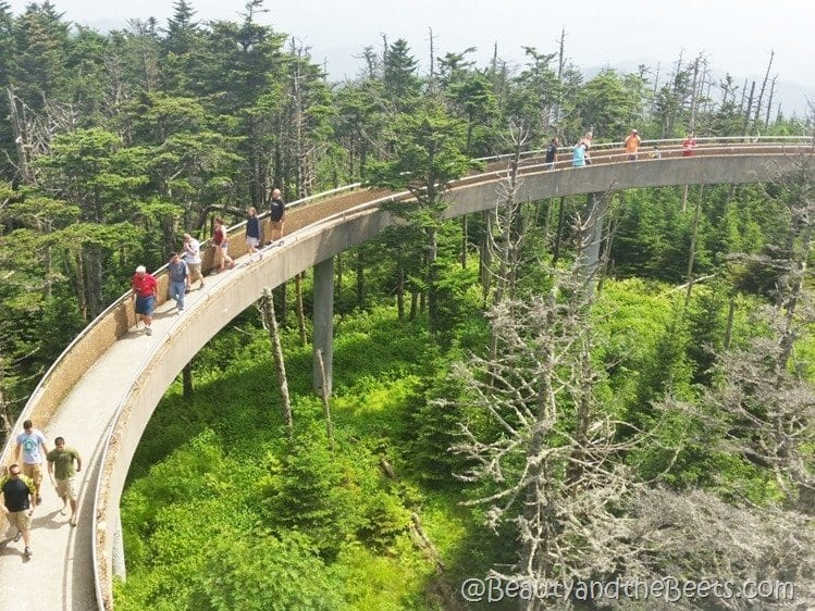 Clingmans Dome Smokies Beauty and the Beets