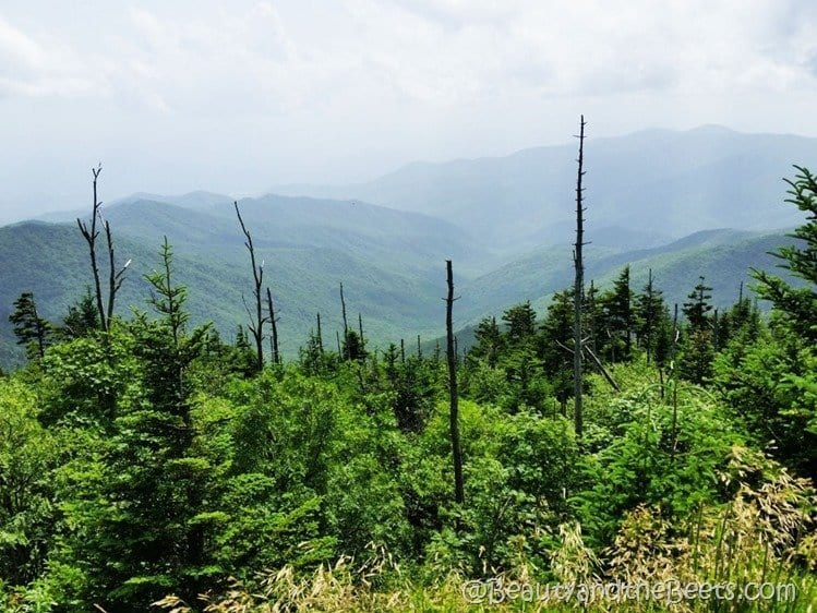 The Great Smoky Mountains Beauty and the Beets