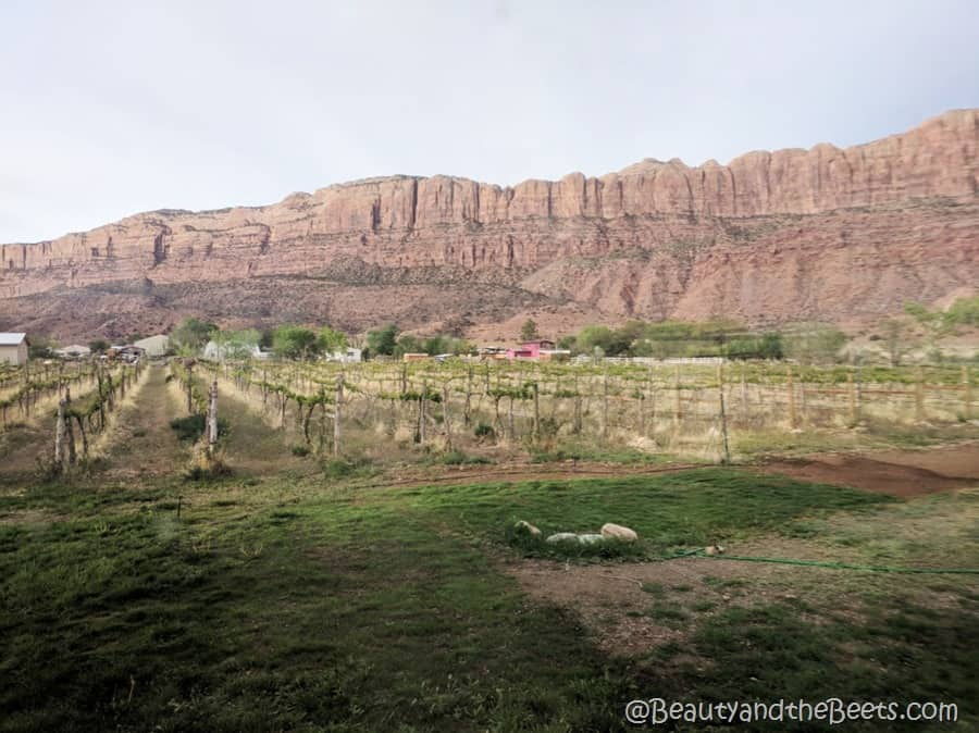 Moab Utah Beauty and the Beets