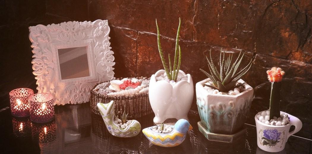 Cactus Plants - My Favourite Houseplants!