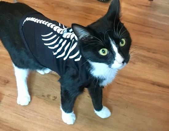 Halloween Tag cat