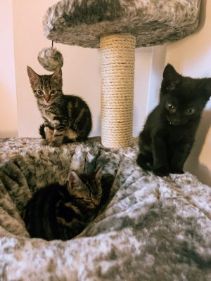 Meet Our New Kittens – Thora, Loki & Meeko