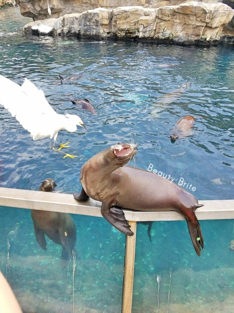 Sea Lion vs Bird Eating