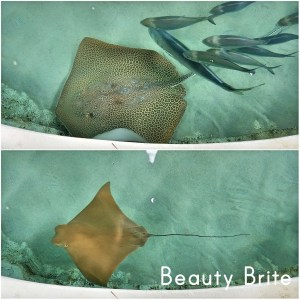 SeaWorld Orlando Stingrays