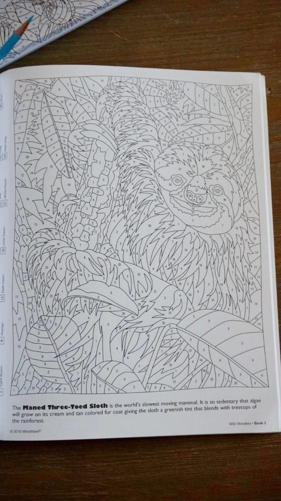Fun adult coloring book sloth page