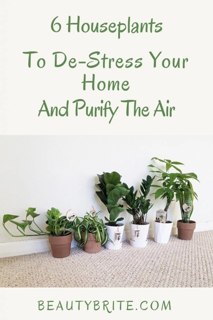 6 Houseplants To De-Stress Your Home And Purify The Air