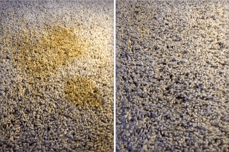 Before & After CLR Stain Master carpet cleaner - bedroom carpet, pet urine stain.
