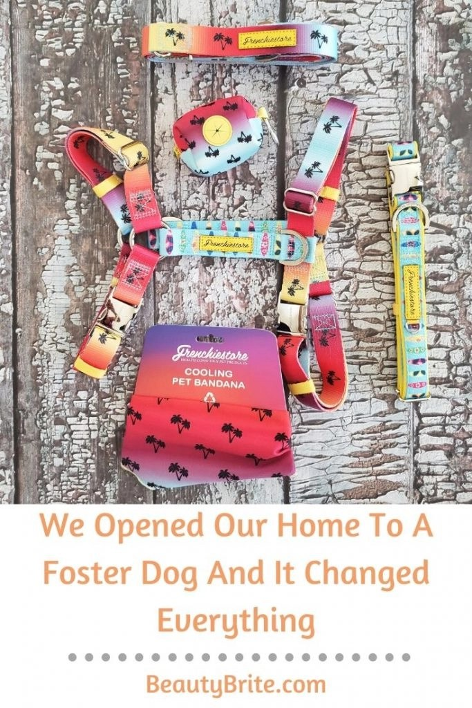 We Opened Our Home To A Foster Dog And It Changed Everything