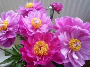 bloemen oma