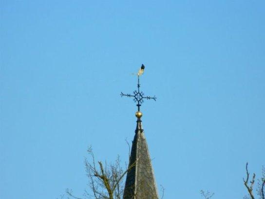 vogel op kerk
