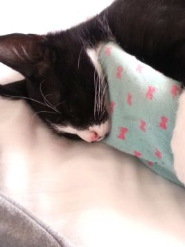 slaperige toulouse