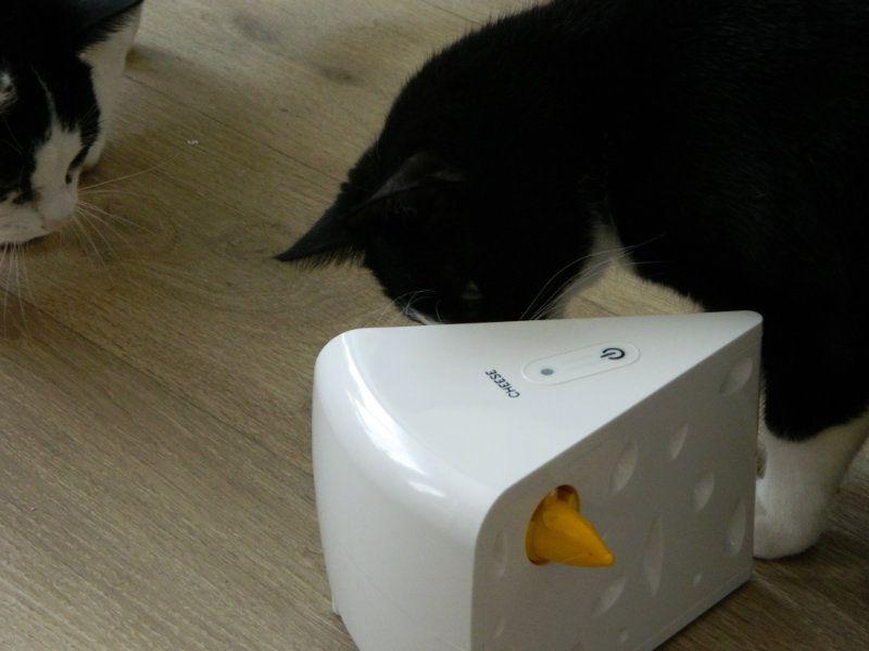 KeeK op de WeeK 10- Cleaning, Keep off en Kattencadeau 8 kat KeeK op de WeeK 10- Cleaning, Keep off en Kattencadeau