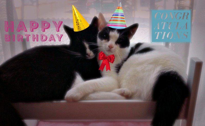 Marie en Toulouse zijn jarig! Lekker foto's kijken! 11 kittens Marie en Toulouse zijn jarig! Lekker foto's kijken!