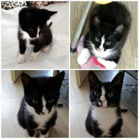 -marie en toulouse kittens en 1 jaar