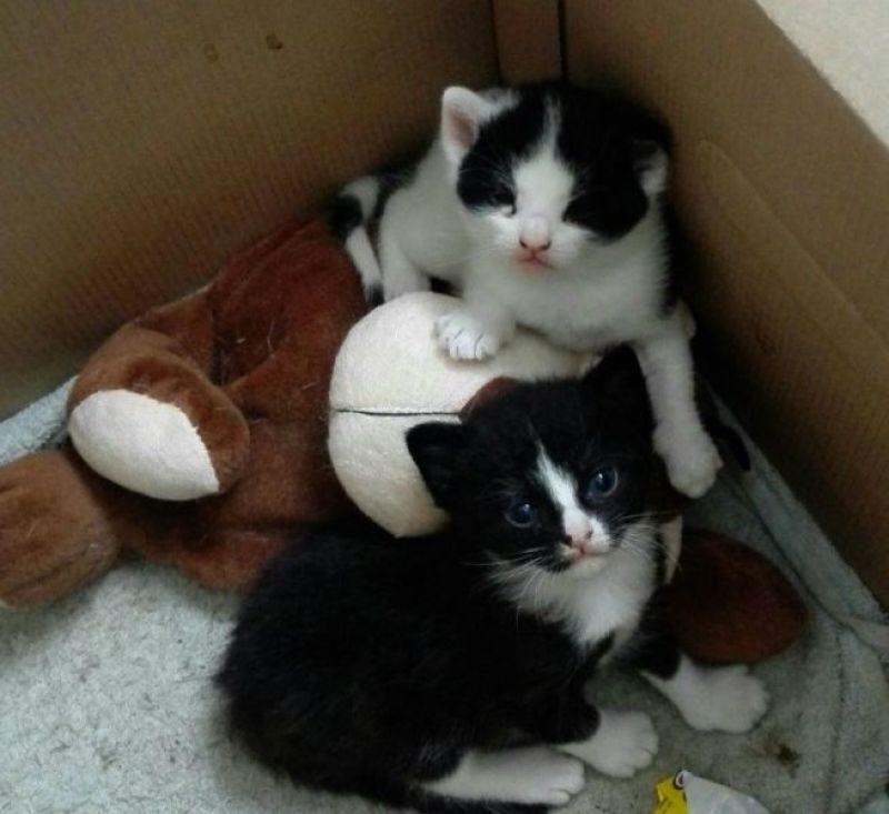 Marie en Toulouse zijn jarig! Lekker foto's kijken! 15 kittens Marie en Toulouse zijn jarig! Lekker foto's kijken!
