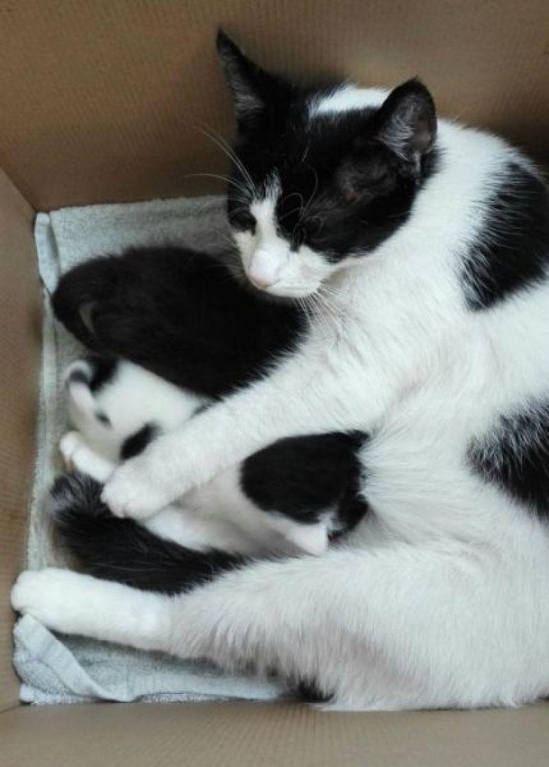 Marie en Toulouse zijn jarig! Lekker foto's kijken! 13 kittens Marie en Toulouse zijn jarig! Lekker foto's kijken!