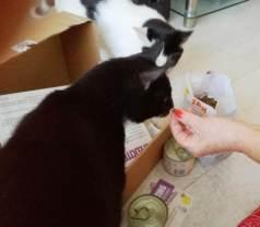 ECOstyle Kittenpakket (9)