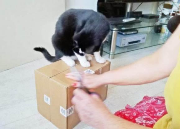 ECOstyle Kittenpakket